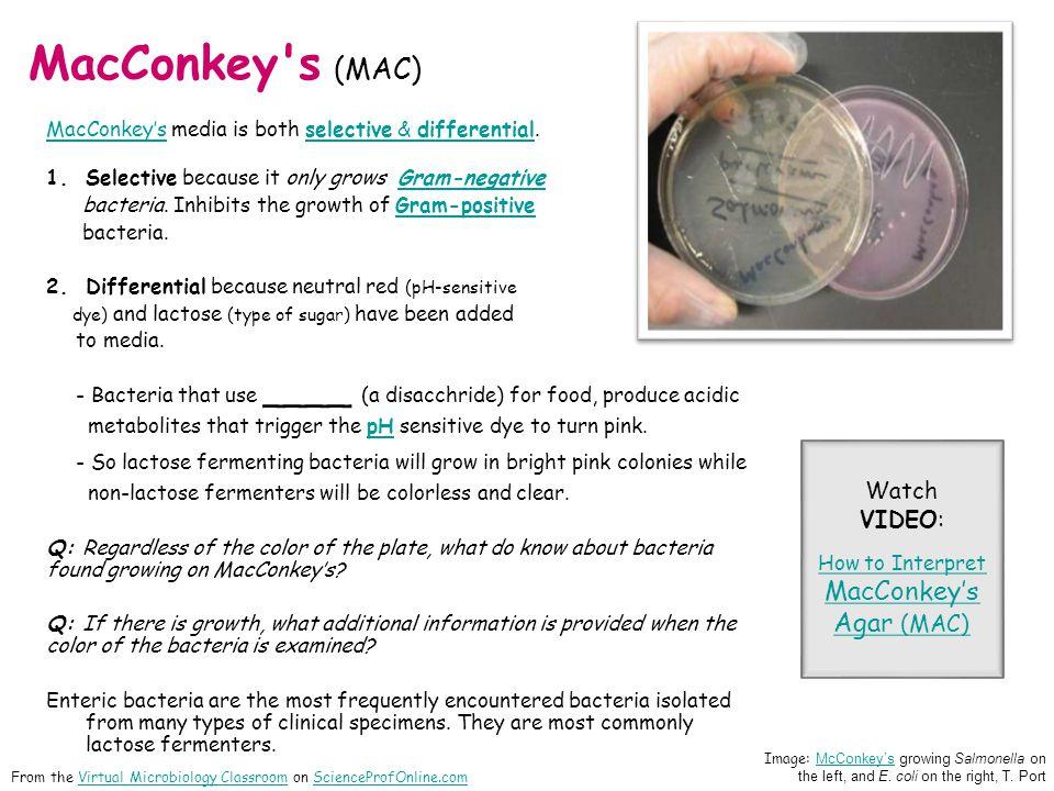 MacConkey's (MAC) MacConkeysMacConkeys media is both selective & differential.selective & differential 1.Selective because it only grows Gram-negative