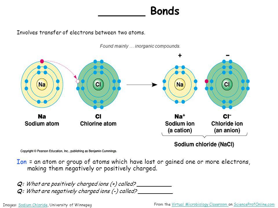 Organic Molecules – Proteins .___________ _________ .