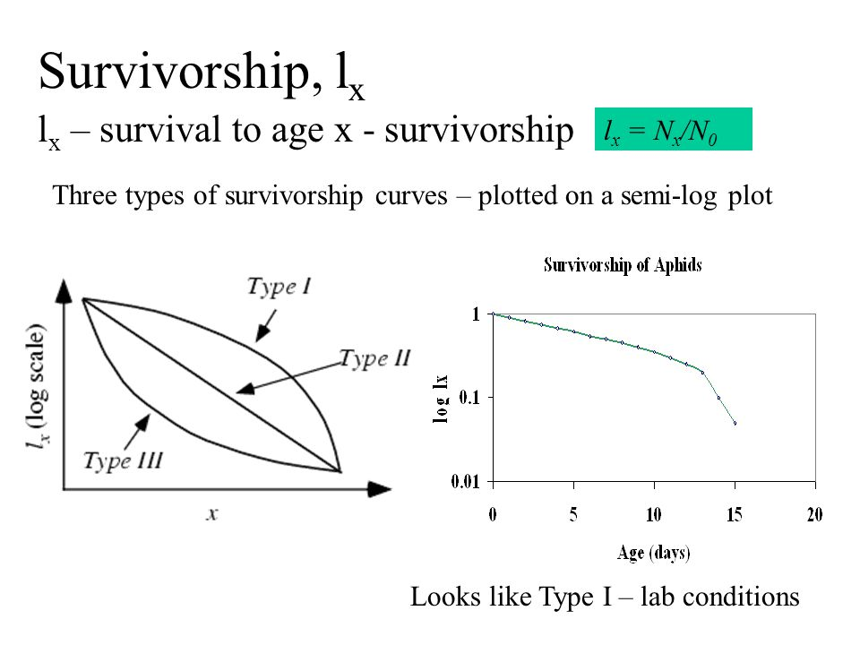 Survivorship, l x l x – survival to age x - survivorship l x = N x /N 0 Three types of survivorship curves – plotted on a semi-log plot Looks like Type I – lab conditions