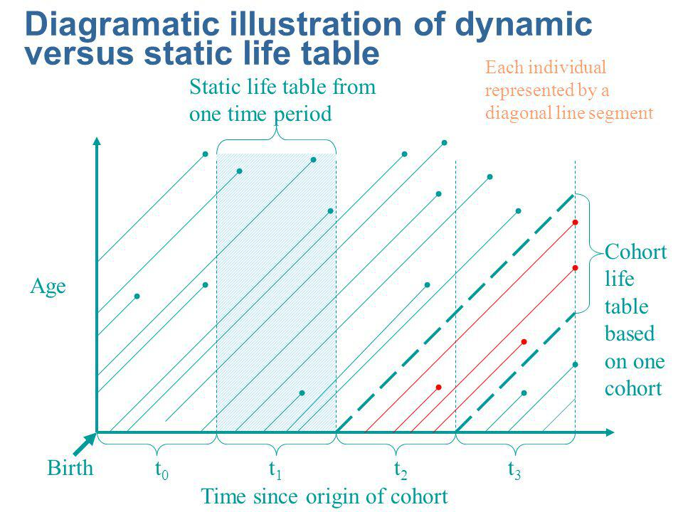 Diagramatic illustration of dynamic versus static life table Time since origin of cohort Age t0t0 t1t1 t2t2 t3t3 Birth Static life table from one time period Cohort life table based on one cohort Each individual represented by a diagonal line segment