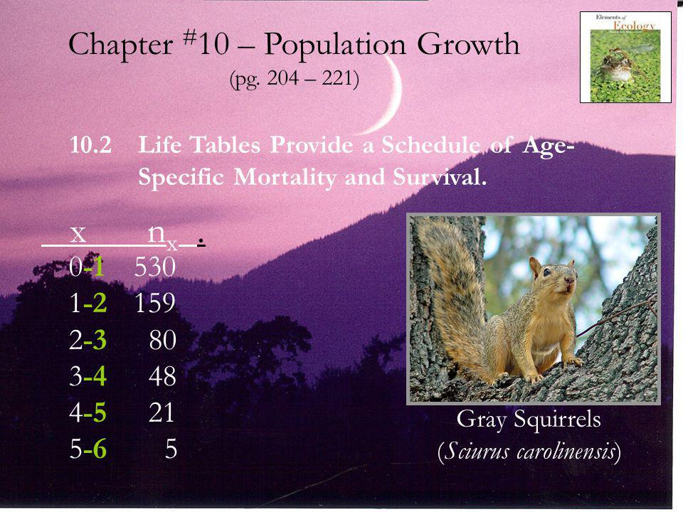 Gray Squirrel (Sciurus carolinensis) Years and Months Stonecrop (Sedum smallii)