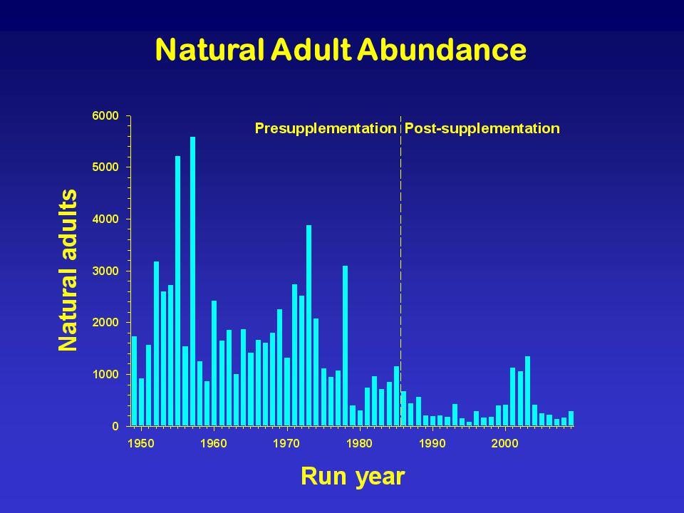 Natural Adult Abundance