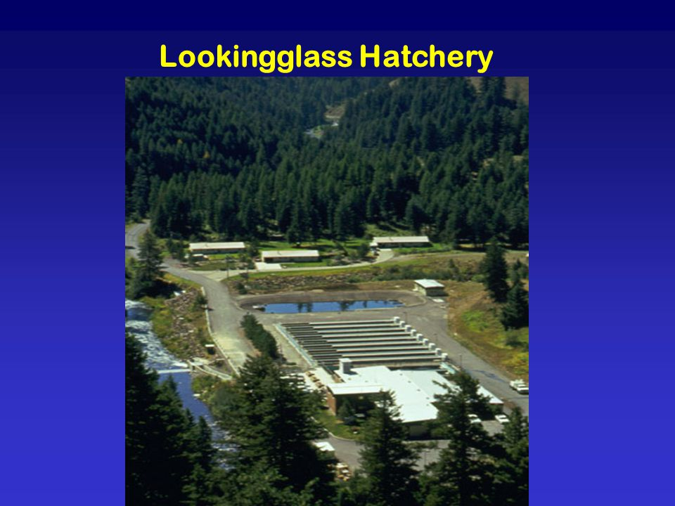 Lookingglass Hatchery