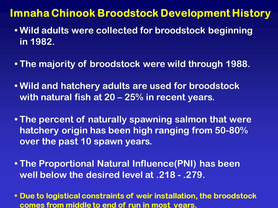 Imnaha Chinook Broodstock Development History Wild adults were collected for broodstock beginning in 1982.