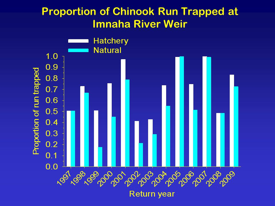 Proportion of Chinook Run Trapped at Imnaha River Weir