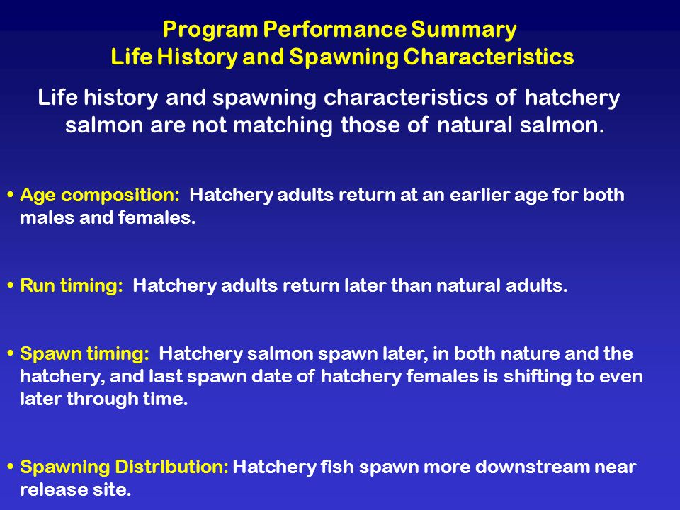 Program Performance Summary Life History and Spawning Characteristics Life history and spawning characteristics of hatchery salmon are not matching those of natural salmon.