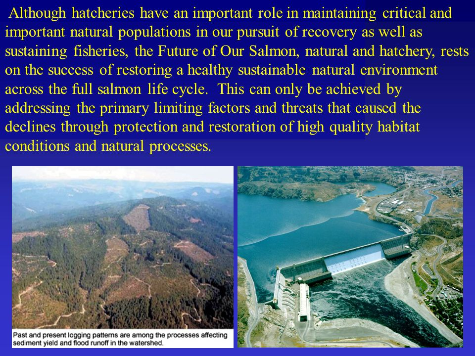 Although hatcheries have an important role in maintaining critical and important natural populations in our pursuit of recovery as well as sustaining