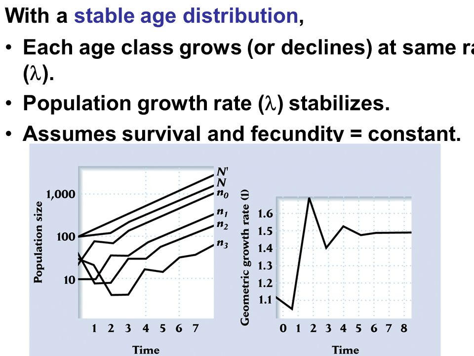 With a stable age distribution, Each age class grows (or declines) at same rate ( ).