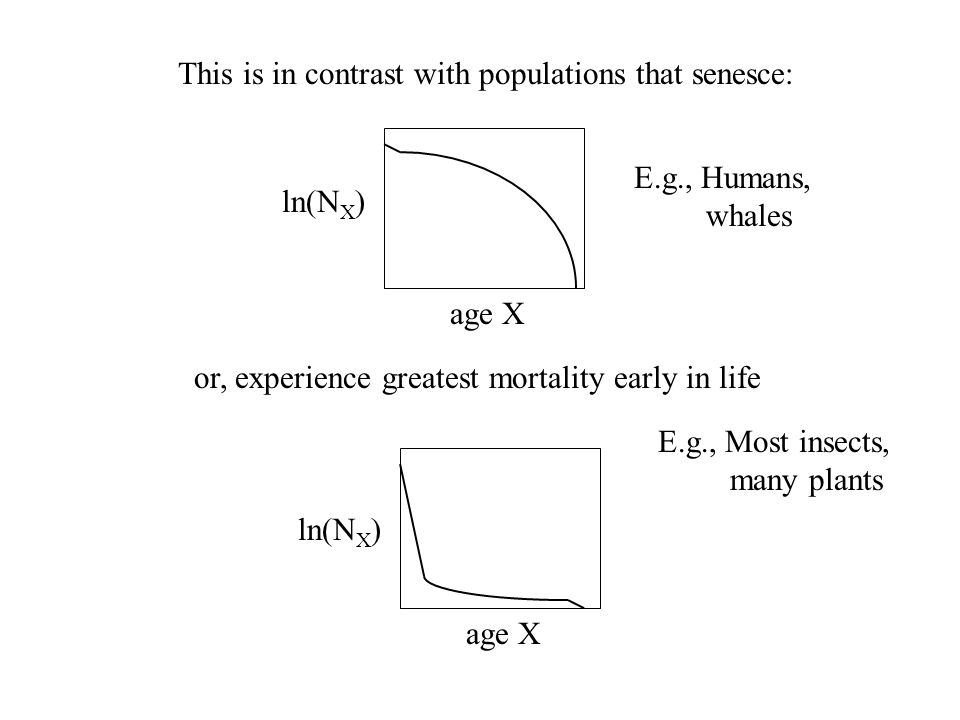 This is in contrast with populations that senesce: age X ln(N X ) E.g., Humans, whales or, experience greatest mortality early in life age X ln(N X )