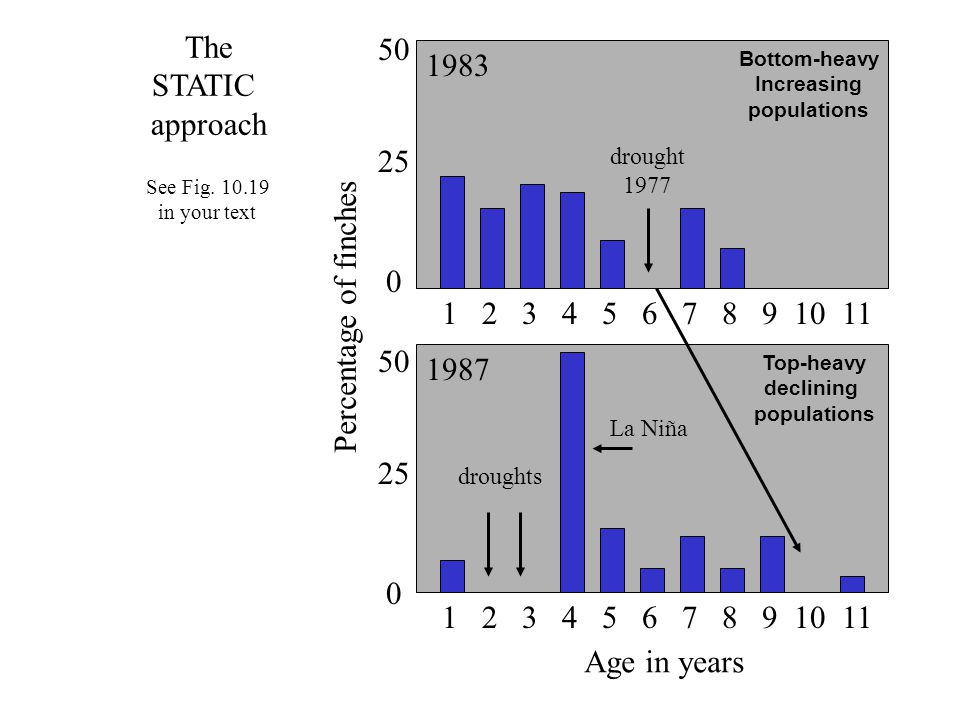 1 2 3 4 5 6 7 8 9 10 11 Age in years 1987 1983 Percentage of finches 0 25 50 0 25 50 droughts La Niña drought 1977 See Fig. 10.19 in your text Bottom-