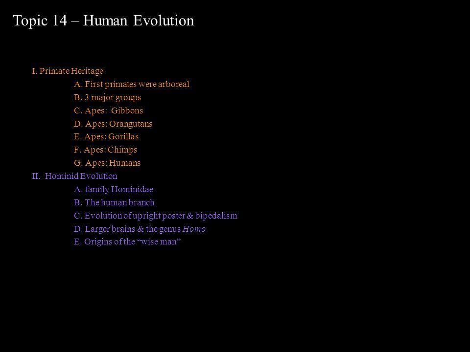 I. Primate Heritage A. First primates were arboreal B. 3 major groups C. Apes: Gibbons D. Apes: Orangutans E. Apes: Gorillas F. Apes: Chimps G. Apes: