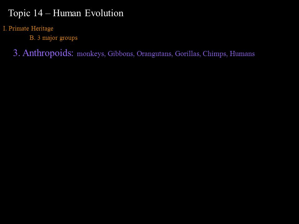 I. Primate Heritage B. 3 major groups Topic 14 – Human Evolution 3.