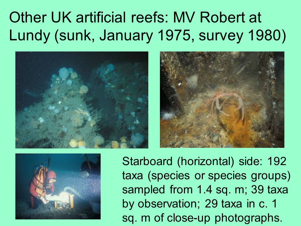 Other UK artificial reefs: MV Robert at Lundy (sunk, January 1975, survey 1980) Starboard (horizontal) side: 192 taxa (species or species groups) sampled from 1.4 sq.