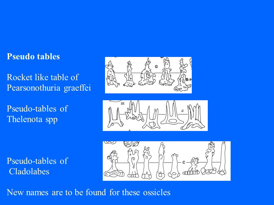 Pseudo tables Rocket like table of Pearsonothuriagraeffei Pseudo-tables of Thelenotaspp Pseudo-tables of Cladolabes New names are to be found for theseossicles