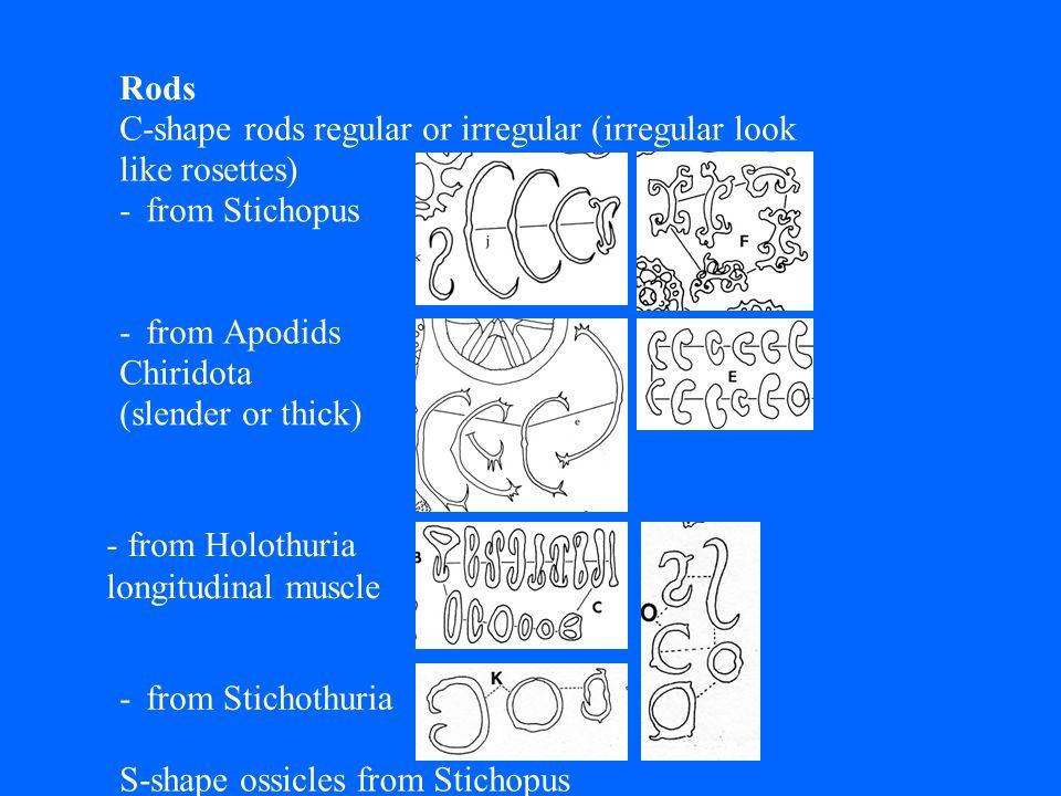 Rods C-shape rods regular or irregular (irregular look like rosettes) - fromStichopus - fromApodids Chiridota (slender or thick) - from Holothuria lon