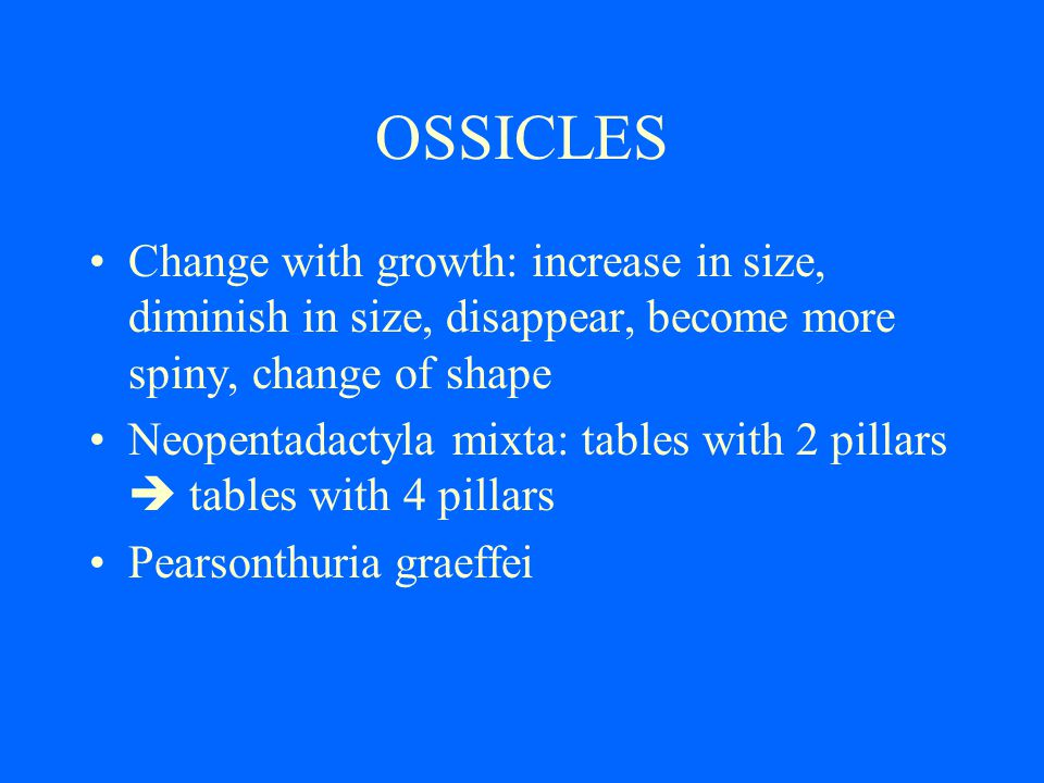 OSSICLES Change with growth: increase in size, diminish in size, disappear, become more spiny, change of shape Neopentadactyla mixta: tables with 2 pillars tables with 4 pillars Pearsonthuria graeffei