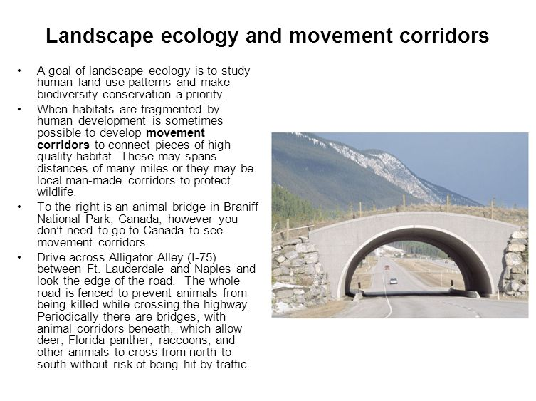 Landscape ecology and movement corridors A goal of landscape ecology is to study human land use patterns and make biodiversity conservation a priority