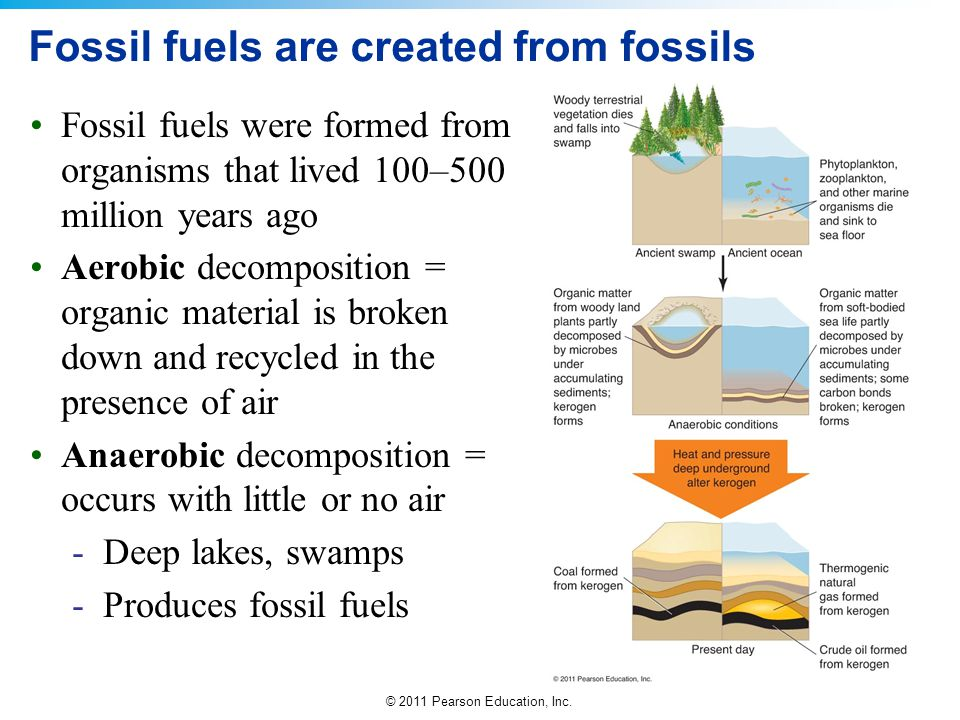 © 2011 Pearson Education, Inc. Fossil fuels are created from fossils Fossil fuels were formed from organisms that lived 100–500 million years ago Aero