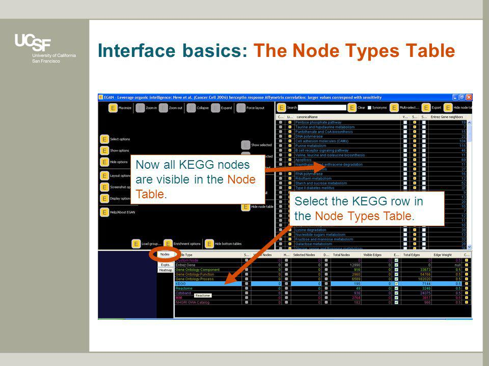 Interface basics: The Node Types Table Right now the Entrez Gene row is selected. Therefore all Entrez Gene nodes are listed in the Node Table. The fi
