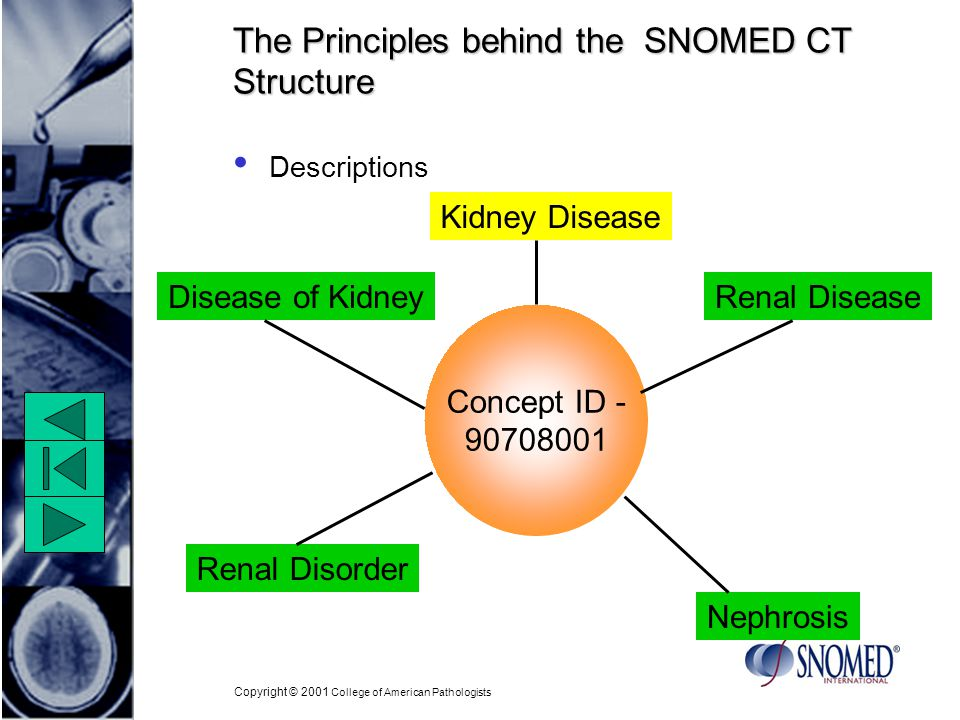 Copyright © 2001 College of American Pathologists The Principles behind the SNOMED CT Structure Descriptions Kidney Disease Nephrosis Concept ID Disease of Kidney Renal Disorder Renal Disease