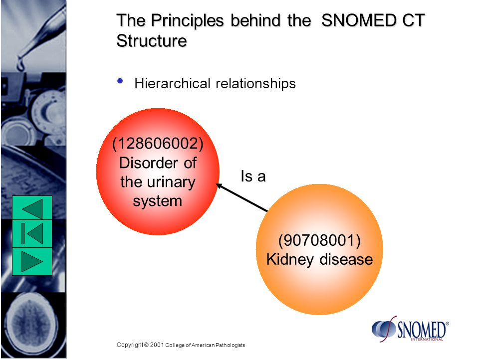 Copyright © 2001 College of American Pathologists The Principles behind the SNOMED CT Structure Hierarchical relationships ( ) Kidney disease ( ) Disorder of the urinary system Is a