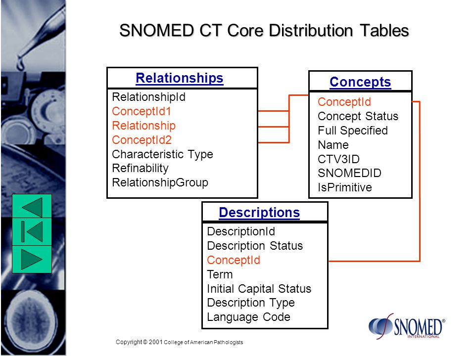 Copyright © 2001 College of American Pathologists SNOMED CT Core Distribution Tables Concepts ConceptId Concept Status Full Specified Name CTV3ID SNOMEDID IsPrimitive Descriptions DescriptionId Description Status ConceptId Term Initial Capital Status Description Type Language Code Relationships RelationshipId ConceptId1 Relationship ConceptId2 Characteristic Type Refinability RelationshipGroup