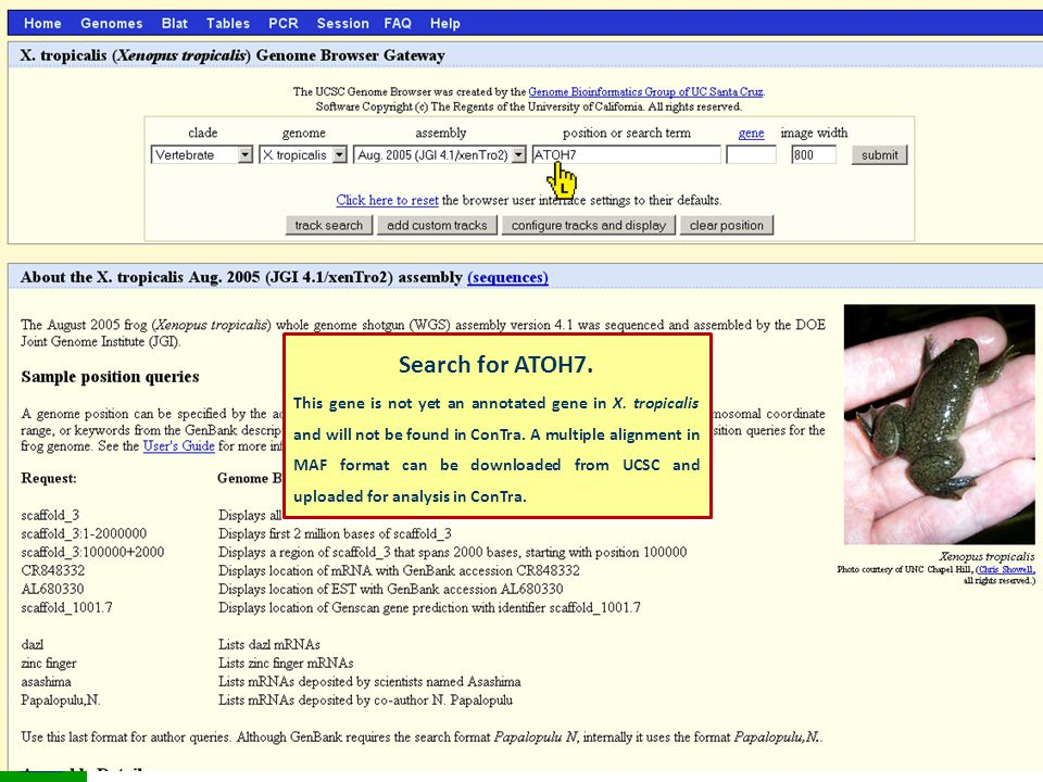 Search for ATOH7. This gene is not yet an annotated gene in X.