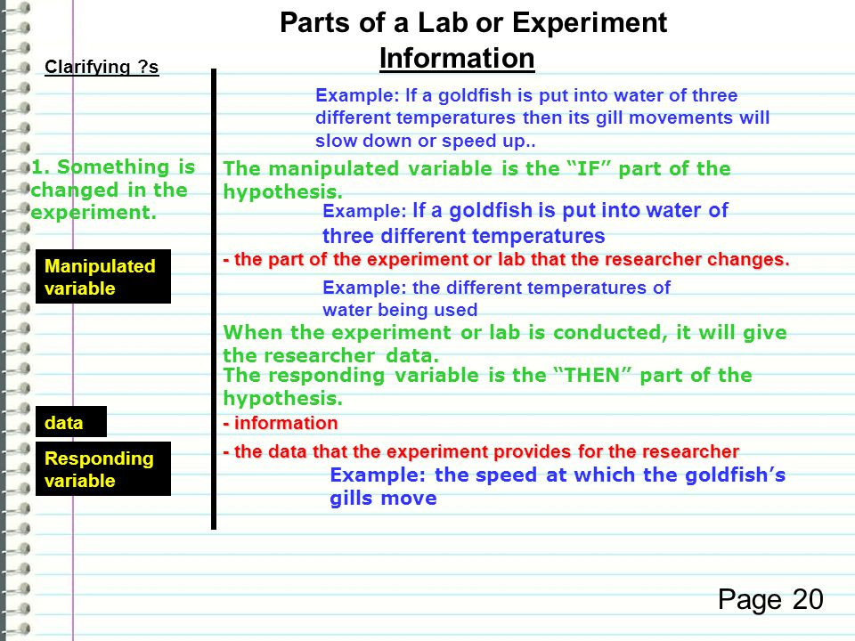 Beginning the lab - the initial question on which the lab is built - the initial question on which the lab is builtTestable question Clarifying ?s Information Page 20 hypothesis - a prediction of what will happed after the lab has been conducted - a prediction of what will happed after the lab has been conducted Example: What will happen to the gill movement of a goldfish when it is put into water at different temperatures.