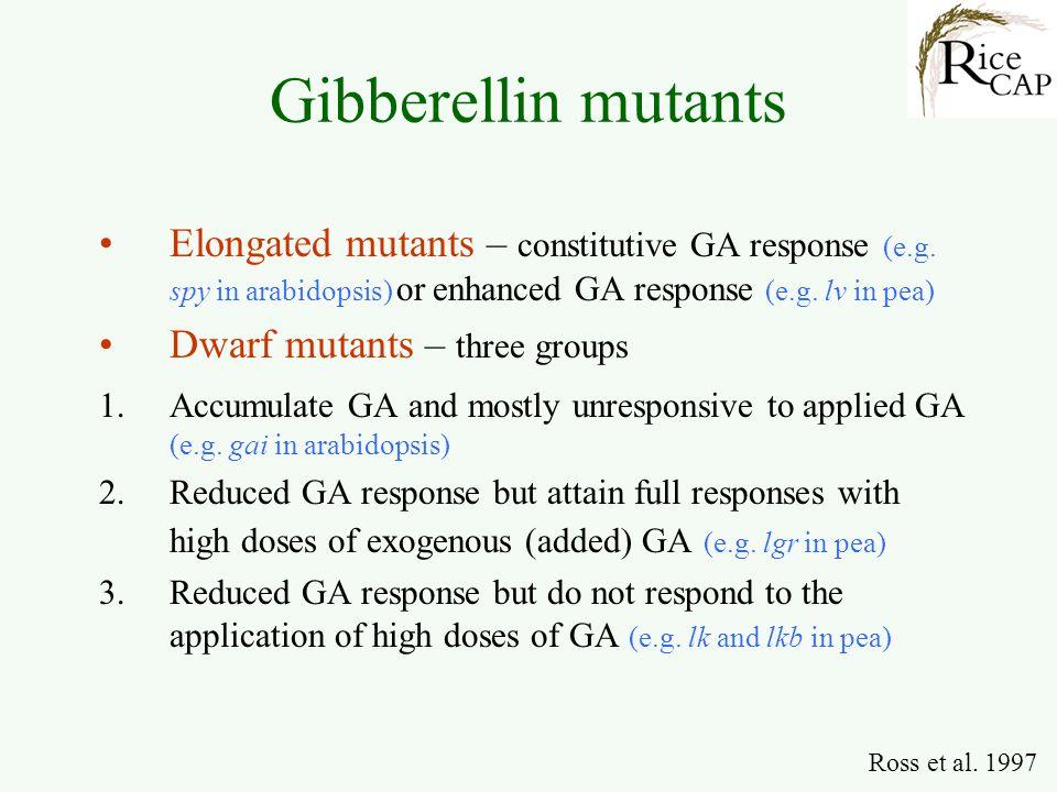 Gibberellin mutants Elongated mutants – constitutive GA response (e.g. spy in arabidopsis) or enhanced GA response (e.g. lv in pea) Dwarf mutants – th