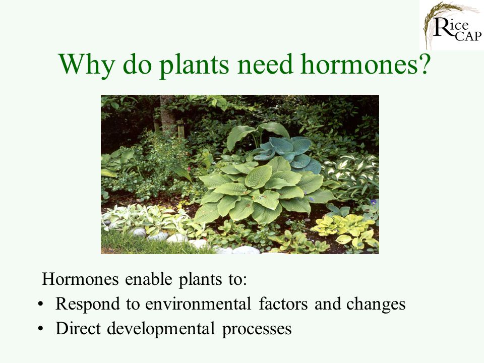 Why do plants need hormones? Hormones enable plants to: Respond to environmental factors and changes Direct developmental processes