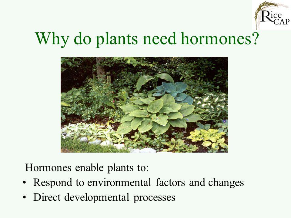 Why do plants need hormones.