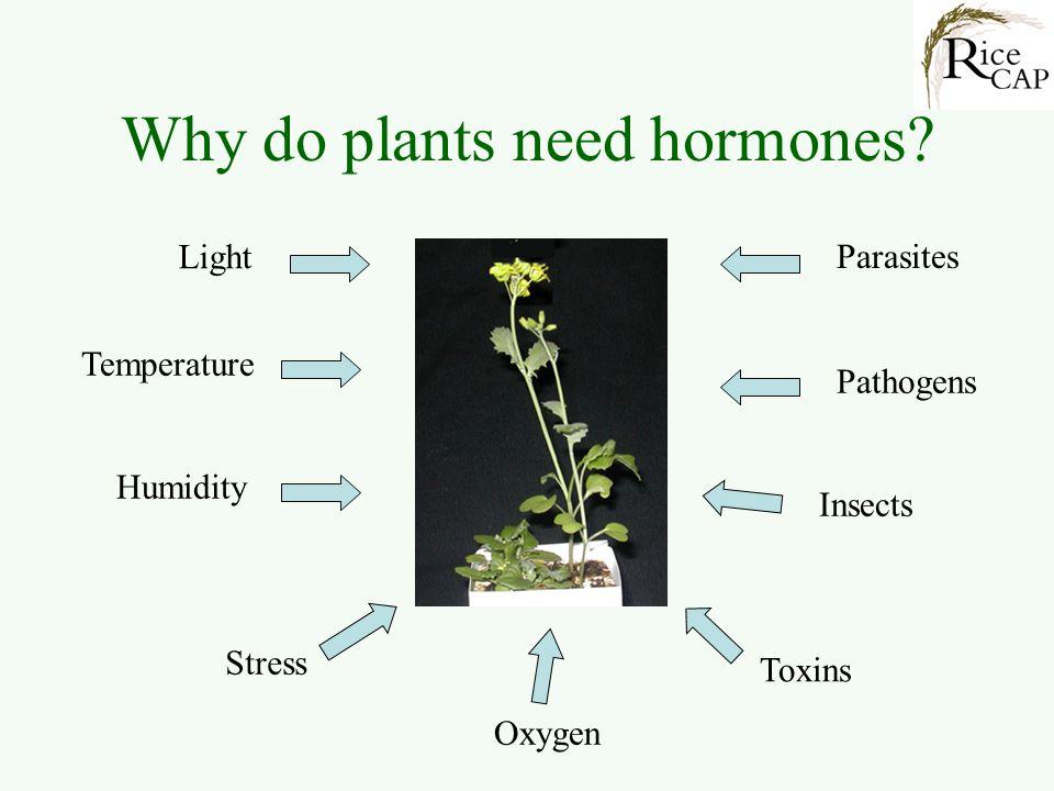 What are hormones.
