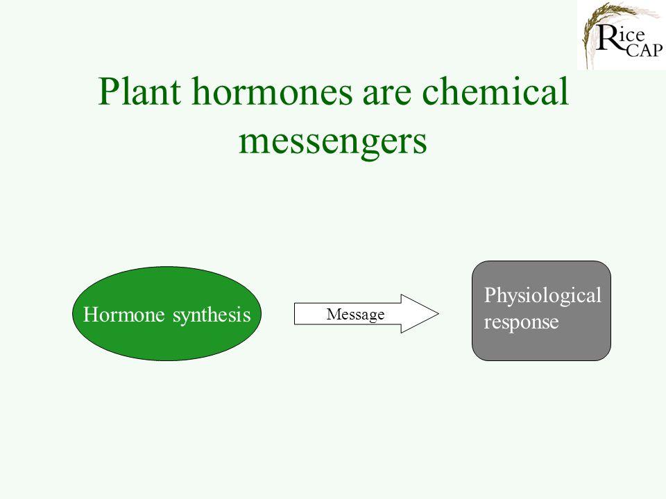 General Plant Hormones Auxins Cytokinins Abscisic acid Ethylene Gibberellins Jasmonic acid Salicylic acid Classical phytohormones