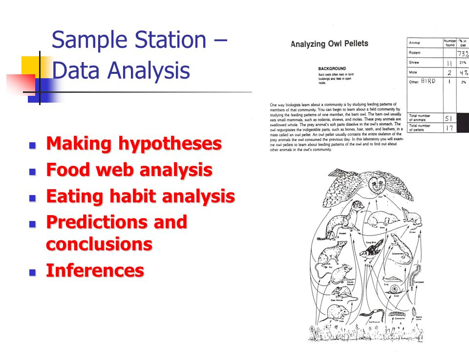 Sample Station – Data Analysis Making hypotheses Making hypotheses Food web analysis Food web analysis Eating habit analysis Eating habit analysis Predictions and conclusions Predictions and conclusions Inferences Inferences