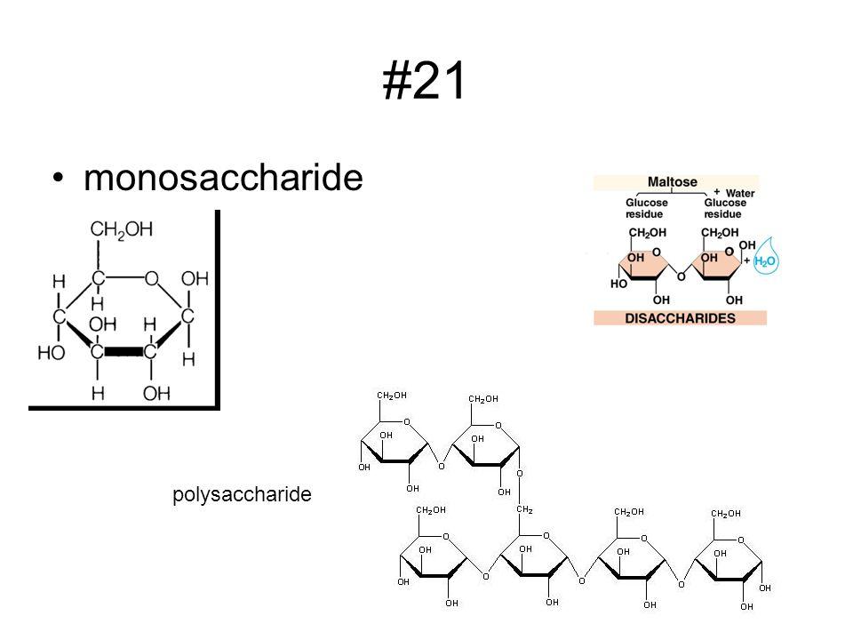 #21 monosaccharide polysaccharide