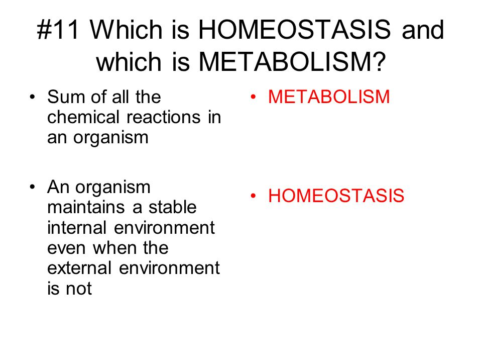#11 Which is HOMEOSTASIS and which is METABOLISM? Sum of all the chemical reactions in an organism An organism maintains a stable internal environment