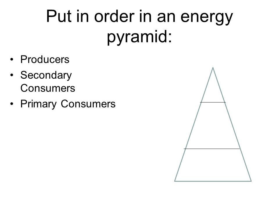 Put in order in an energy pyramid: Producers Secondary Consumers Primary Consumers