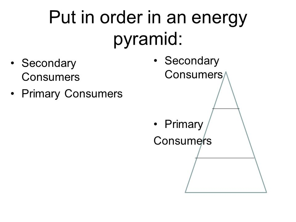 Put in order in an energy pyramid: Secondary Consumers Primary Consumers Secondary Consumers Primary Consumers