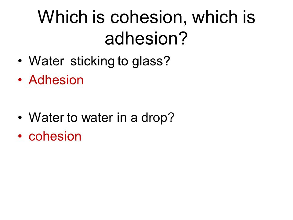 Which is cohesion, which is adhesion? Water sticking to glass? Adhesion Water to water in a drop? cohesion