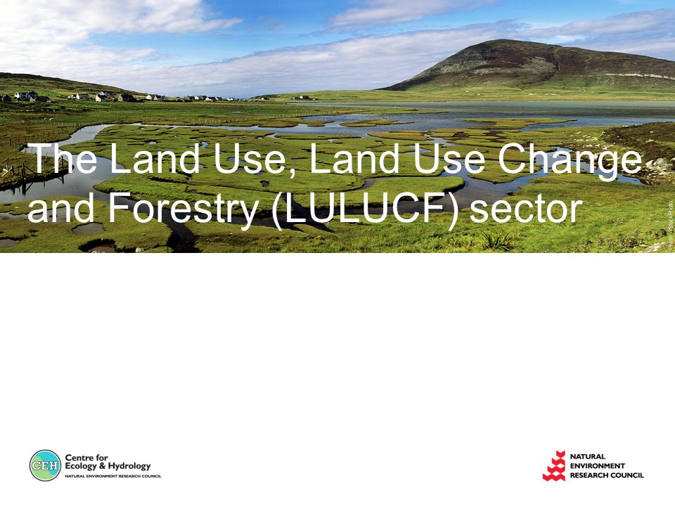 The Land Use, Land Use Change and Forestry (LULUCF) sector