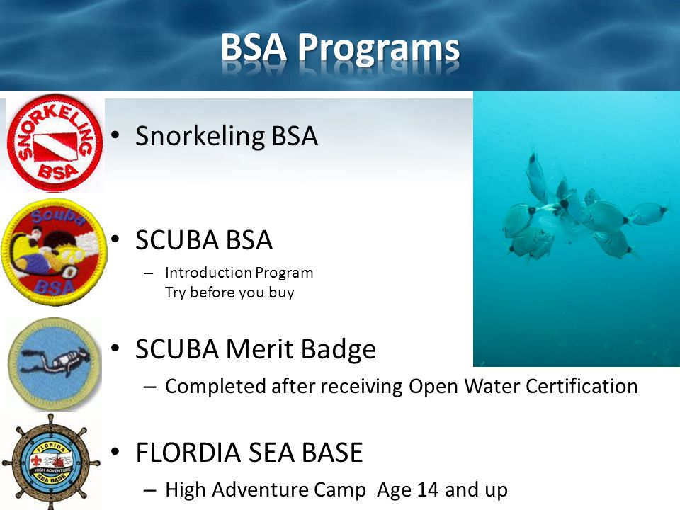 World Recreational Scuba Training Council The World Recreational Scuba Training Council (WRSTC) is dedicated to the worldwide safety of the recreation