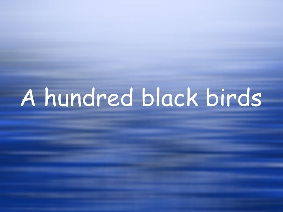 A hundred black birds