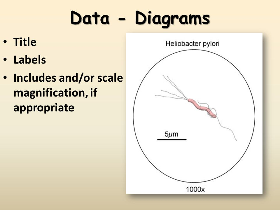 Data - Diagrams Title Labels Includes and/or scale magnification, if appropriate