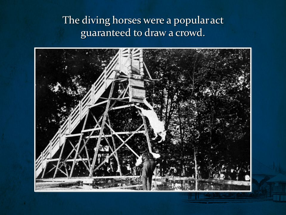 The diving horses were a popular act guaranteed to draw a crowd.