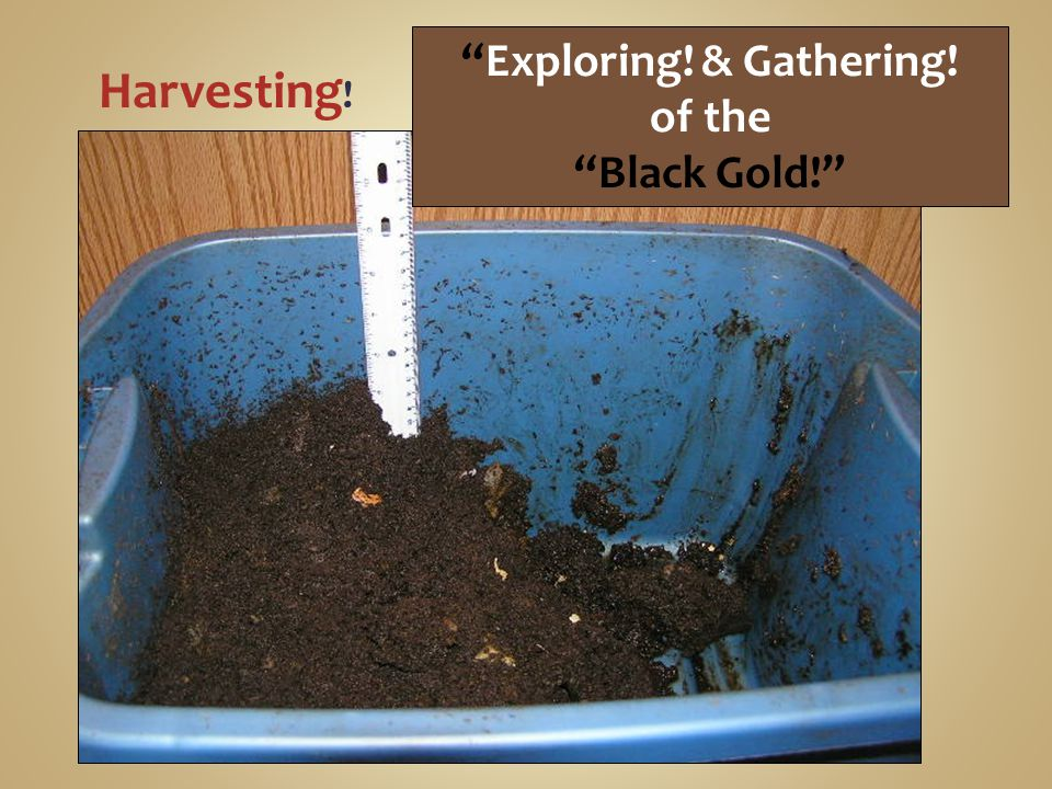 Harvesting ! Exploring! & Gathering! of the Black Gold!