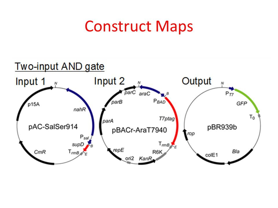 Construct Maps