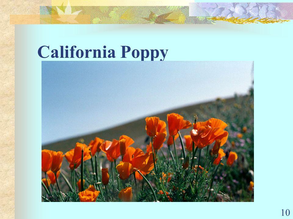 10 California Poppy