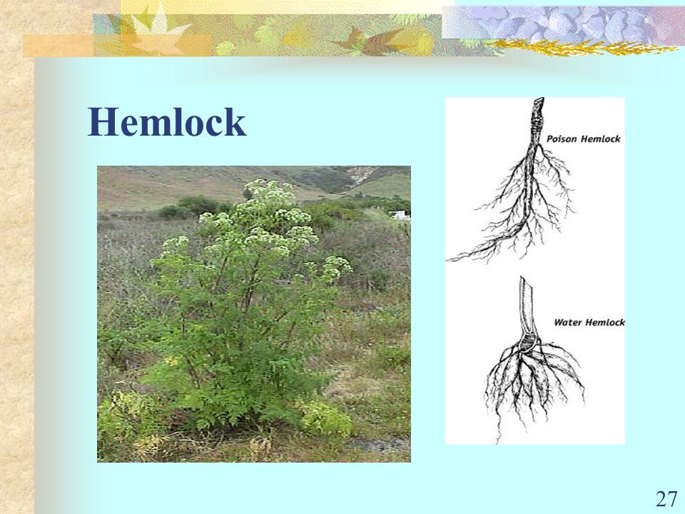 27 Hemlock