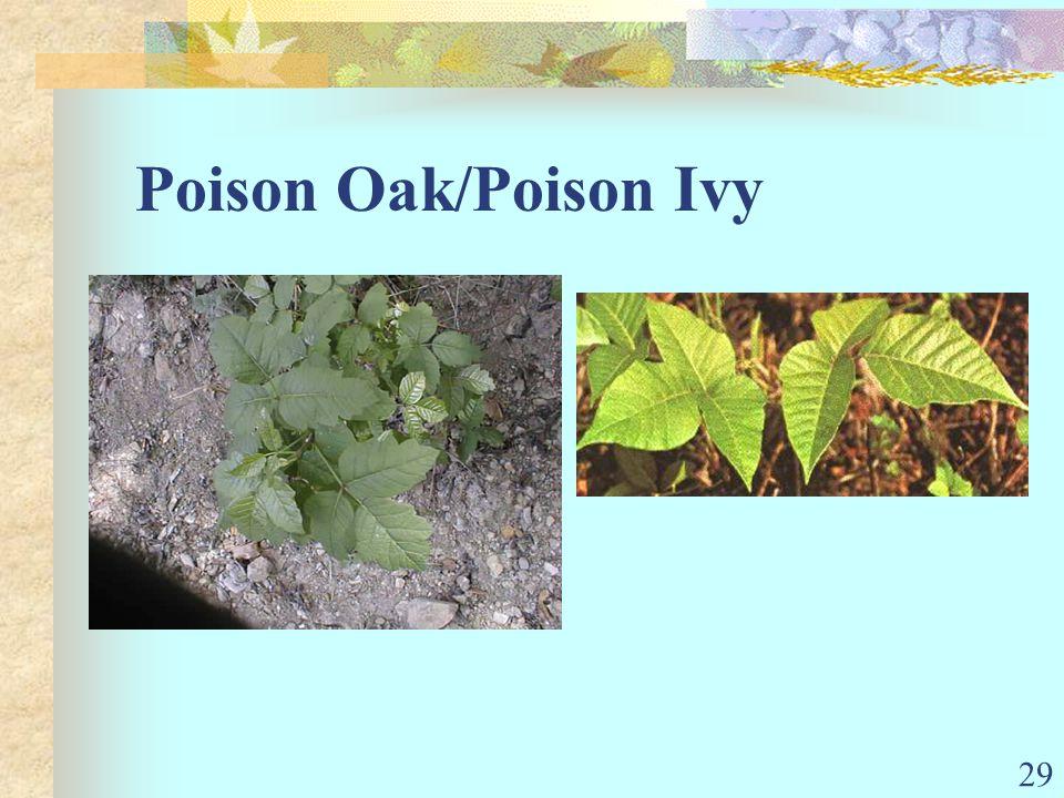 29 Poison Oak/Poison Ivy