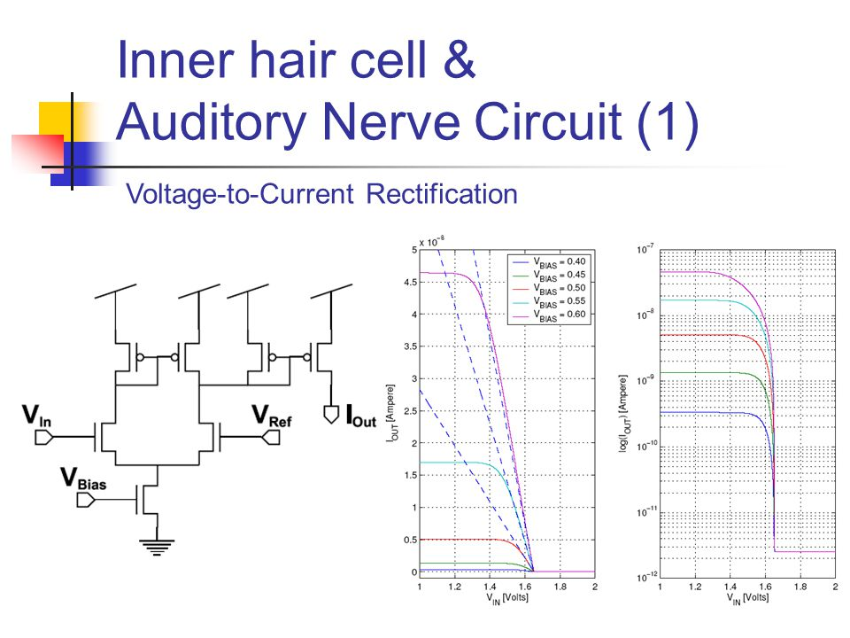 Inner hair cell & Auditory Nerve Circuit (1) Voltage-to-Current Rectification